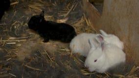 Fyra gulliga lilla kaniner i bur arkivfilmer