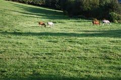 Fyra hästar i en äng Arkivfoton
