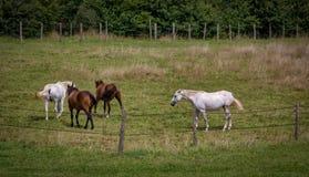 Fyra hästar i ett fält arkivfoto