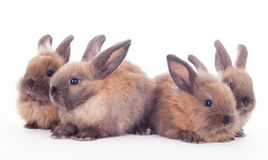 Fyra kaniner som isoleras på viten. royaltyfri fotografi
