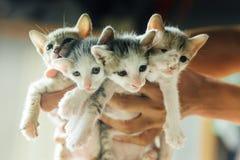 fyra kattungar Fotografering för Bildbyråer