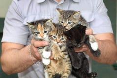 Fyra kattungar i de manliga händerna Royaltyfri Bild