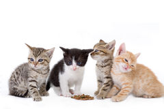 fyra kattungar sitter Royaltyfria Bilder