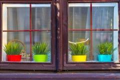 Fyra kulöra krukor med växter bak fönstret royaltyfria foton