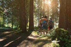 Fyra man och kvinna som promenerar fotvandra slingabanan i skogträn under solig dag Grupp av vänfolksommar Royaltyfria Bilder