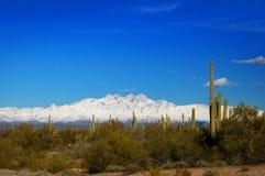 Fyra maximumberg som täckas i insnöade Arizona med kaktuns och öknen, borstar i förgrunden arkivfoto