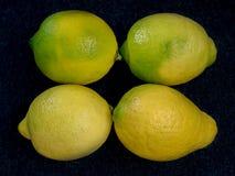 Fyra mogna gula citroner i rader Fotografering för Bildbyråer