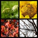 fyra natursäsonger arkivfoton