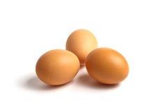 Fyra nya ägg lokaliseras på en vitbakgrund Royaltyfri Foto