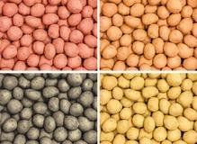 Fyra olika typer av nya potatisar Royaltyfri Fotografi