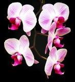 fyra orchids arkivbild
