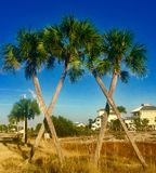 fyra palmträd Arkivfoto