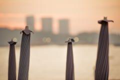 fyra paraplyer Arkivbild