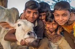 Fyra pojkar och kalv royaltyfri foto