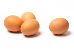 Fyra ägg på vitbakgrund Arkivbild