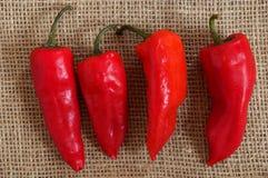 Fyra röda peppar Royaltyfri Foto