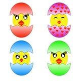Fyra roa hönor som kläckas från ägg royaltyfri illustrationer