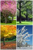 Fyra säsonger royaltyfri foto