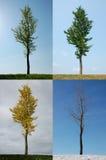 fyra säsonger royaltyfri bild
