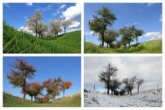Fyra säsonger Cherry Trees fotografering för bildbyråer