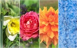 Fyra säsonger: Fjädra, sommaren, hösten och vintern Royaltyfri Fotografi
