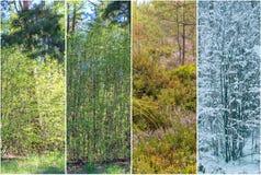 Fyra säsonger: Fjädra, sommaren, hösten och vintern Arkivbilder