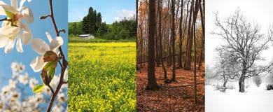 Fyra säsonger i fyra bilder Arkivfoto