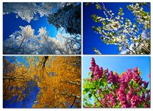 Fyra säsonger i skogen Arkivbild
