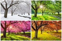 Fyra säsonger med japanska körsbärsröda träd arkivfoto