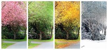 Fyra säsonger på den samma gatan royaltyfri foto