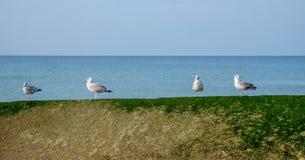 Fyra seagulls i rad som står på en havsvägg Arkivfoto