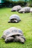 Fyra sköldpaddor arkivfoto