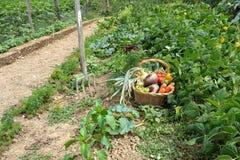 fyra skördgrönsaker Arkivfoto