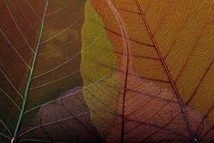 Fyra skelett- leafs2 Arkivfoton