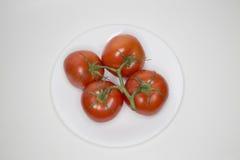 Fyra som är nya på de röda tomaterna för vinranka på en vit platta Arkivbild