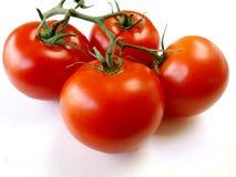 fyra tomater Arkivbild