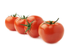 Fyra tomater i en isolerad linje Arkivbild