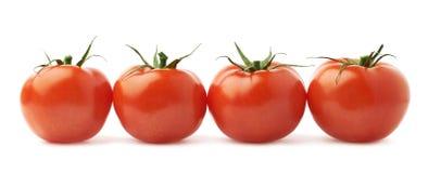 Fyra tomater i en isolerad linje Arkivfoto