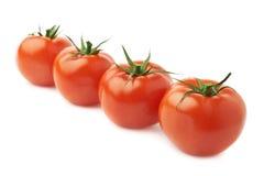 Fyra tomater i en isolerad linje Royaltyfria Bilder