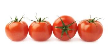 Fyra tomater i en isolerad linje Arkivbilder