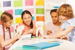 Fyra tonåringar som studerar anatomin på klassrumet Arkivfoton