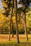 Fyra träd i höst i en parkera royaltyfri fotografi