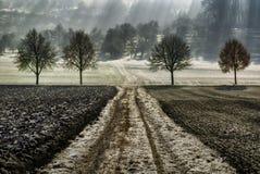 Fyra träd i rad royaltyfri fotografi