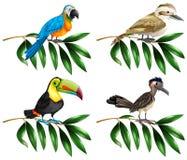 Fyra typer av lösa fåglar på filial royaltyfri illustrationer