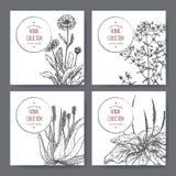 Fyra växt- etiketter med calendulaen, St John wort, aloe, plantago Arkivfoton