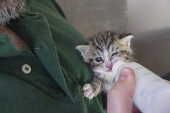 Fyra veckor gammal kattunge som dricker ut ur flaskan Arkivfoton