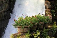 Fyra vinfat som används som blommaplanters som är ordnade på den gamla stenväggen nära vattenfallet Arkivfoton