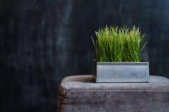 Fyrkantig järnkruka med grönt gräs mot en mörk bakgrund Arkivfoton