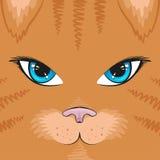 Fyrkantig katt för kort Royaltyfri Bild