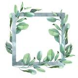 Fyrkantig ram med gräsplan- och blåtteukalyptussidor arkivfoton